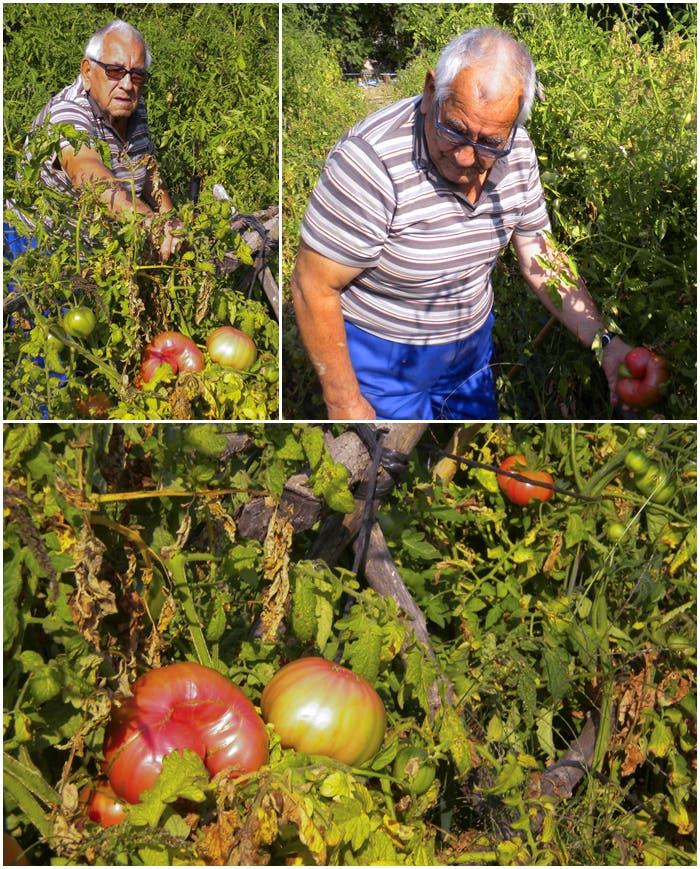 Rufino con sus tomates