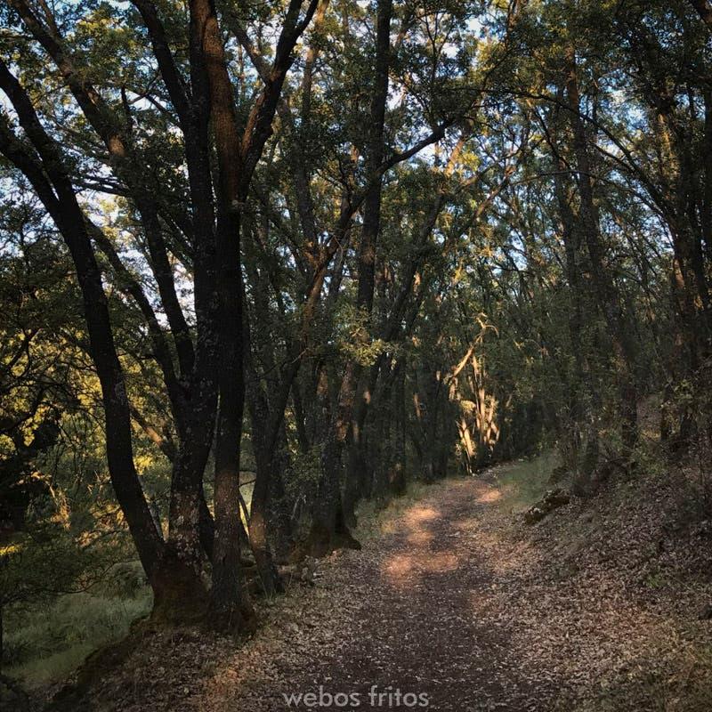 Dentro del bosque de Valdenazar