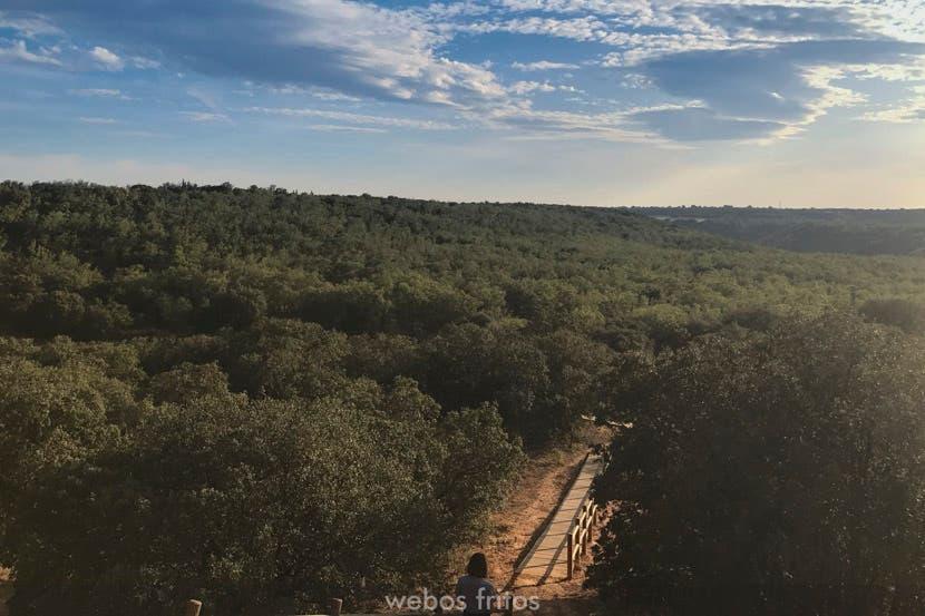 El bosque de Valdenazar